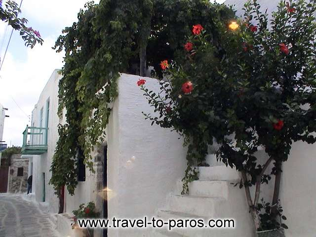 PARIKIA PAROS - The lime walls and the flowers are creating beautiful pictures.